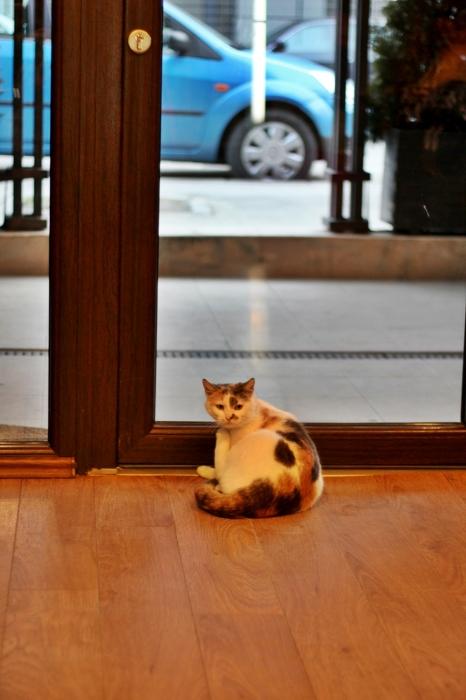 cafeneaua cu pisici cluj